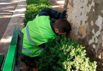 Operativo de control de plagas en Plaza Flores