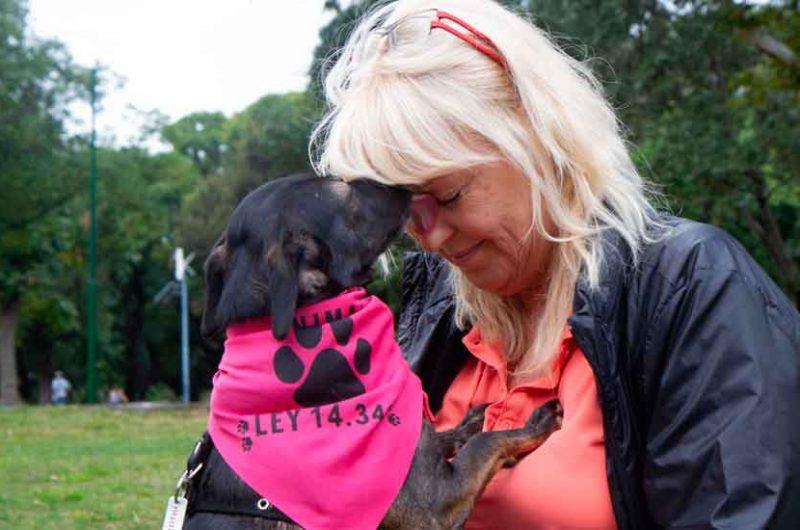 La Ciudad dio en adopción a más de mil perros y gatos rescatados