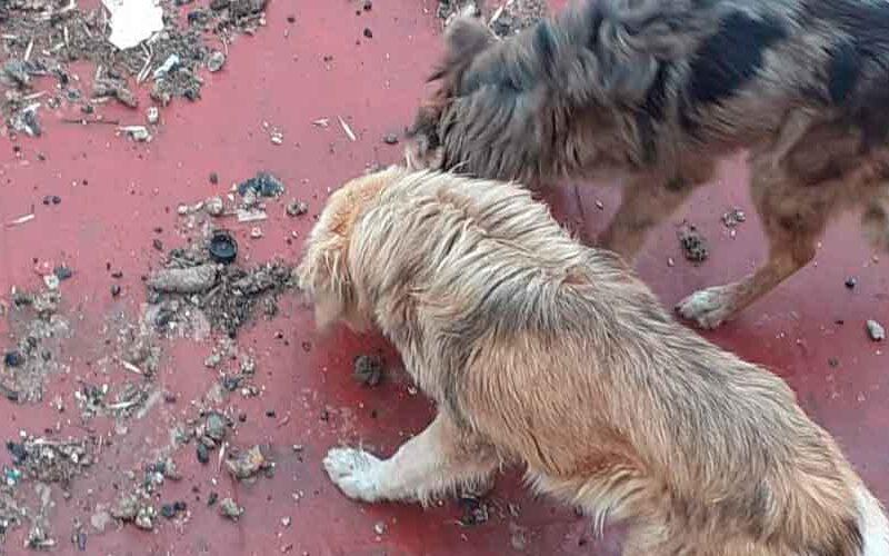 La Policía rescató a cuatro perros por maltrato animal
