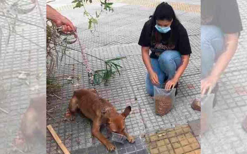 Rescataron a 16 perros de una casa del barrio de Flores